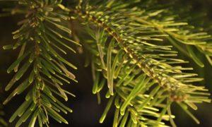 bester spritzguss weihnachtsbaum 2018 spritzguss tannenbaum test. Black Bedroom Furniture Sets. Home Design Ideas