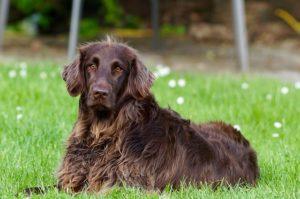 gps tracker hund ohne monatliche kosten